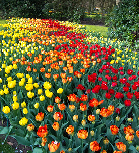Patchwork Quilt Keukenhof Gardens, The Netherlands