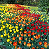 Patchwork Quilt<br /> Keukenhof Gardens, The Netherlands