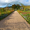 Monet's Garden Path<br /> Giverny, France