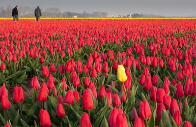 One in a Million Lisse, The Netherlands