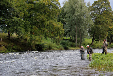 Playing a good fish on the Turn Pool, River Teviot