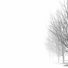 Foggy day 015-28-Edit