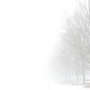 Foggy day 015-28-2