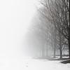 Foggy day 015-27