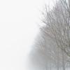Foggy day 015-28