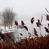 Foggy day 015-43