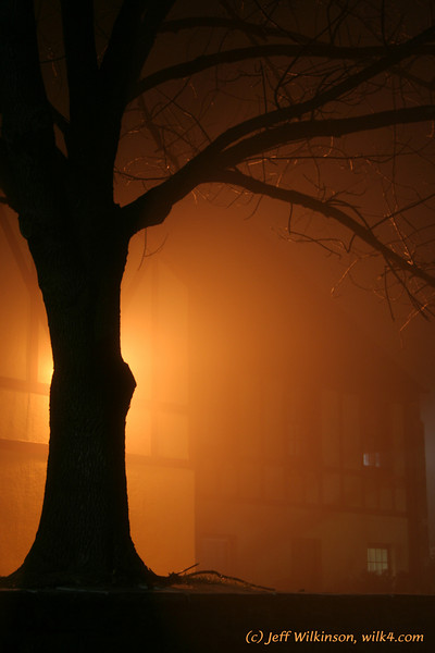 #7940, an ominous tree with orange backlighting in  dense fog