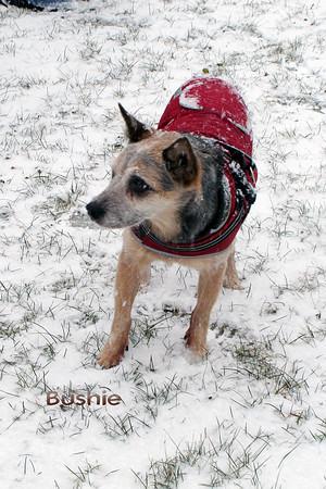 Dec2012_Bushie
