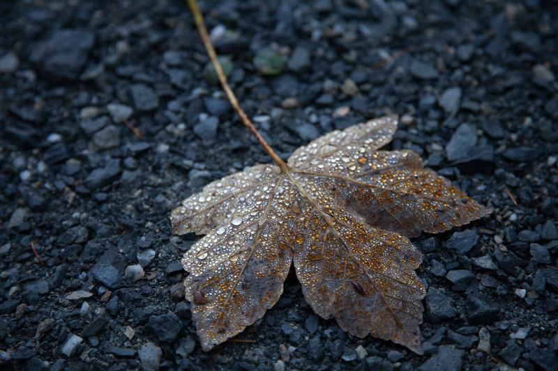 Herbst-Wanderung mit Andy, Emil Keuschnigg und Joe über die Heidensperre zum Steinalm - truamhafter Herbsttag mit Sonne!