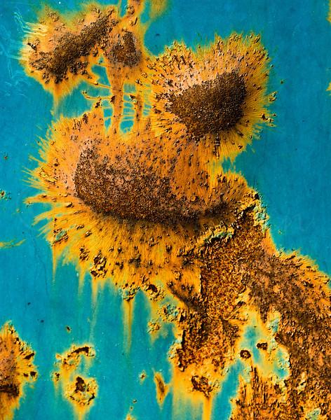 Sunflowrs