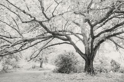 swamp_oak-fpr+xt1-24