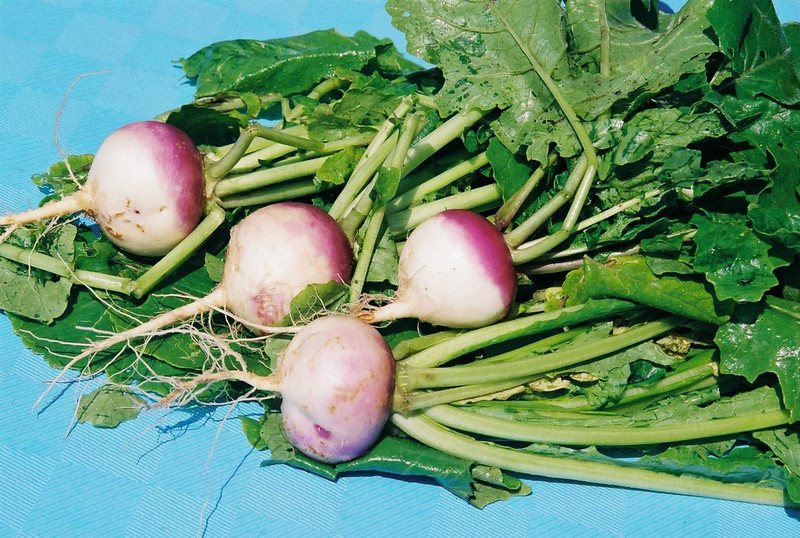 Turnips from our Watertown garden.