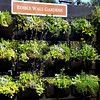 Grow Your Own Seasonings and Spices in Orange County California