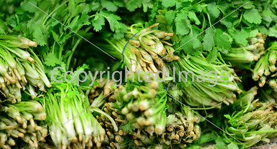 green herbs leaves bunches