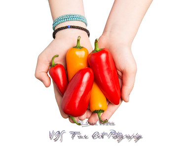 Hands Offering Red and Orange Mini Peppers