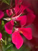 carlaflowers_10382