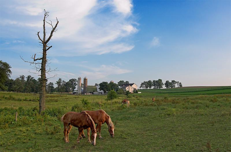 horseheavenfarm_moviesize72dpi