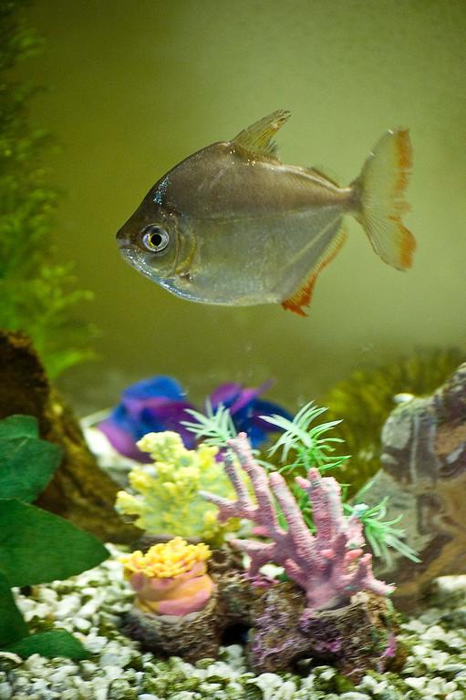 Fish_Tank_01202008_02