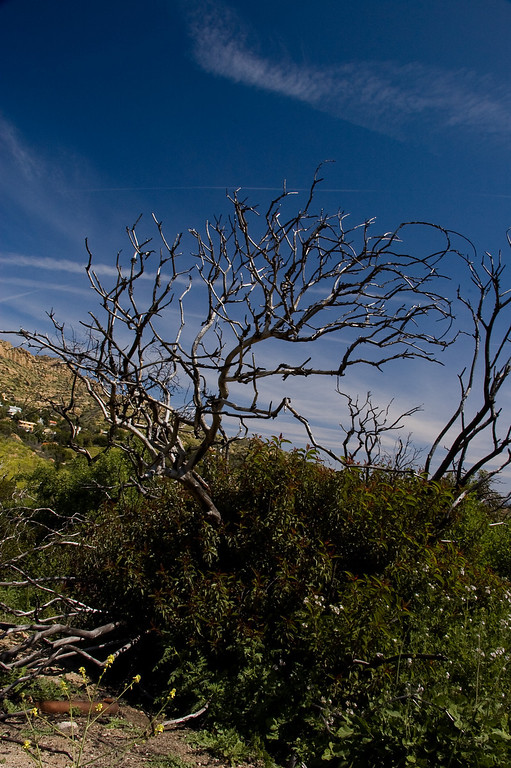 Bell_Canyon_Area_20080321_021