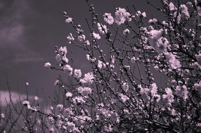 japanese_garden_woodley_20080311_177