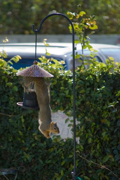 Squirrel_122307_006