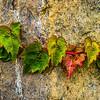 Fall Ivy & Granite
