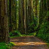 Enchanted Road 3