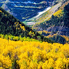 Fall Color, Mt Timpanogos