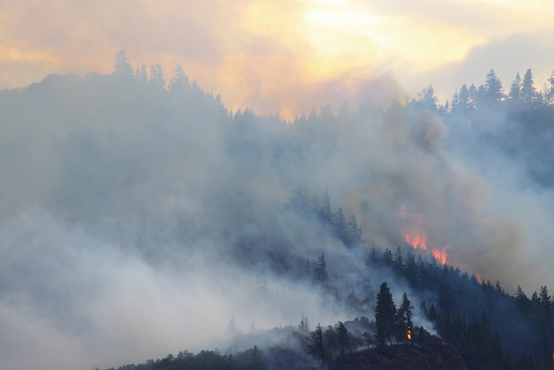 forest fire-12