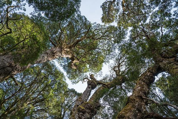 Tree Lover's Paradise