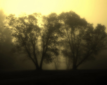 Trees, Fog, Sunrise