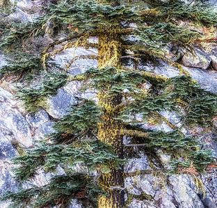 Harmony Of Tree And Rock