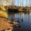 October Park-11
