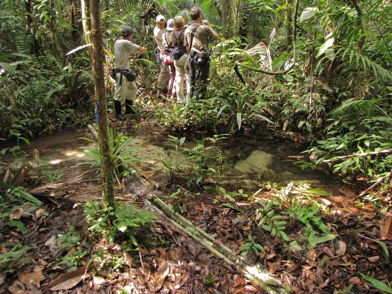 W - Forest birding via new bridgeW