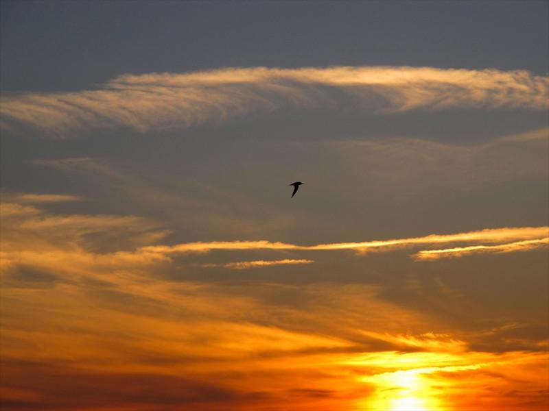 J-Sarasota Sunset