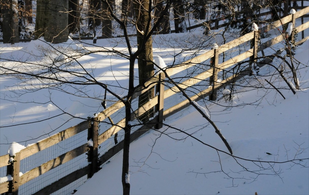 W-Neighbor's Fence in Early Morning