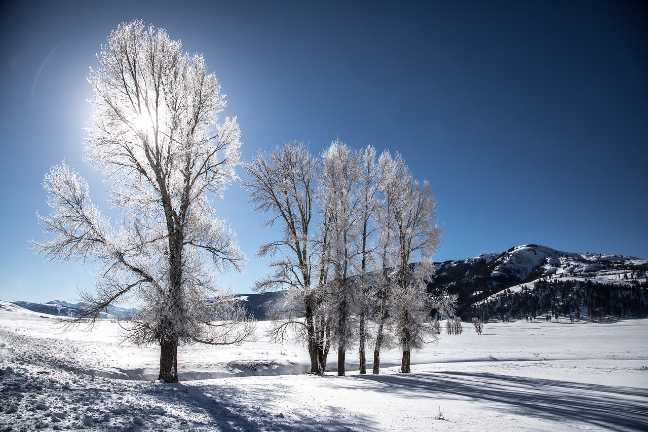 M - Lamar Valley HoarFrost