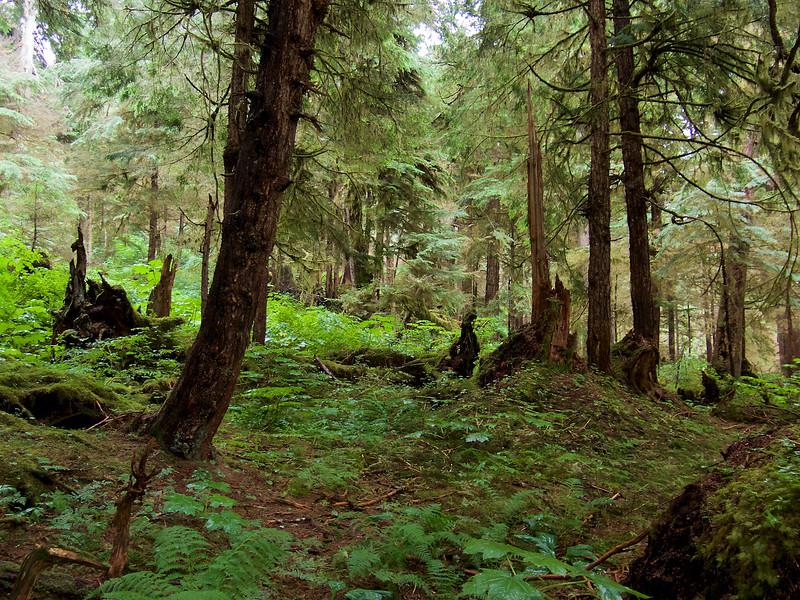 I -  Saoor Bay Alaska