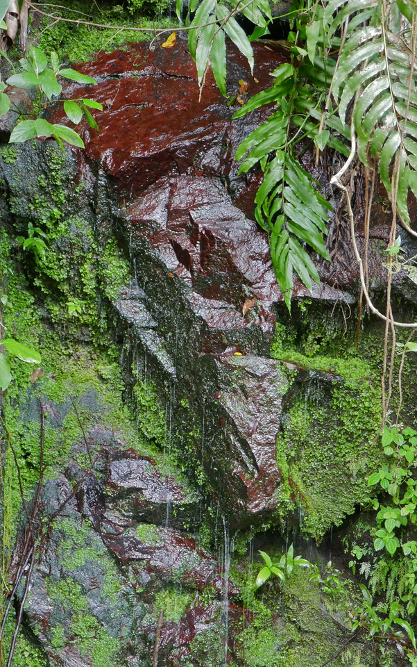 W - Wetness Puerto Rico Rain Forest