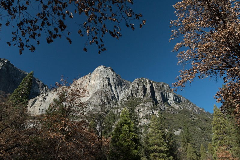M - Typical look up in Yosemite NP