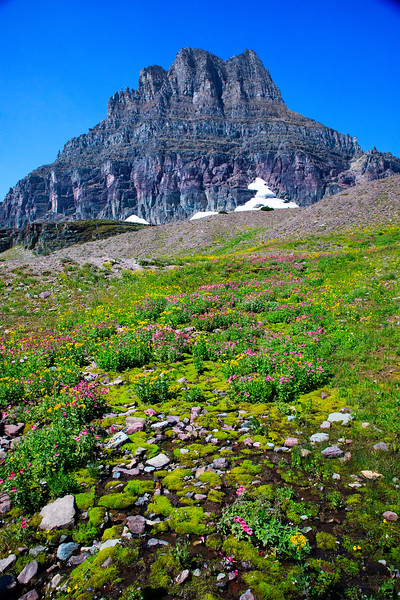 M - On Hidden Valley Trail, Logan Pass, Glacier NP