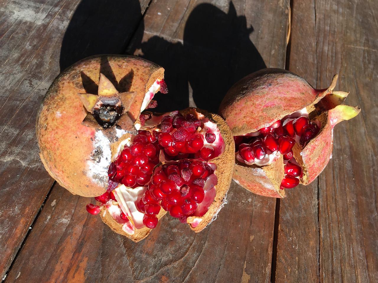 J -  Pommegrantes