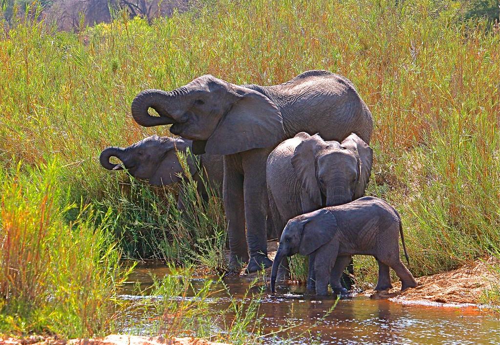 B -  Elephant Family