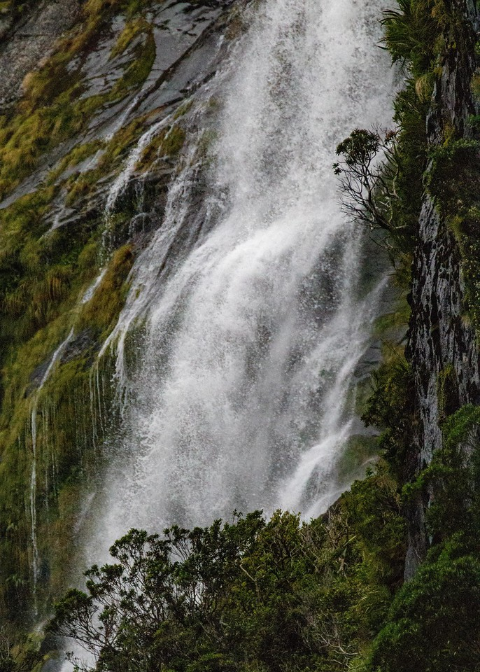 M - Tree on Milford Sound Waterfall