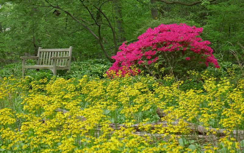 W - Backyard colors