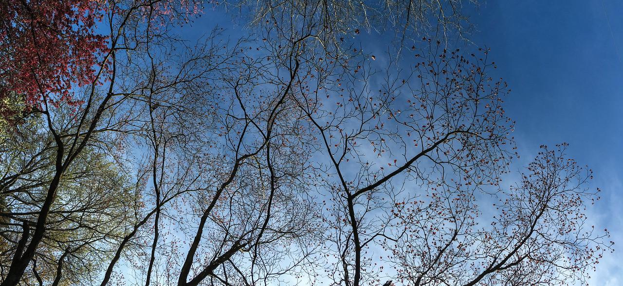 J - Tree Sky