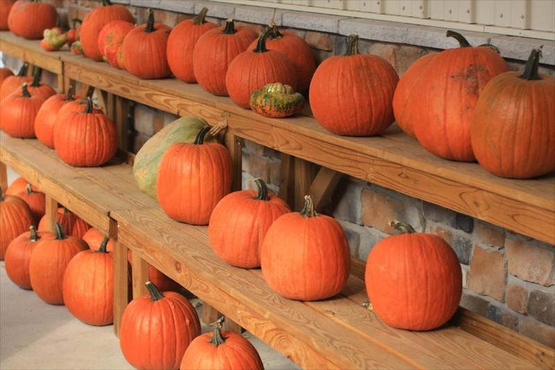 M Pumpkins at Lewes Orchard