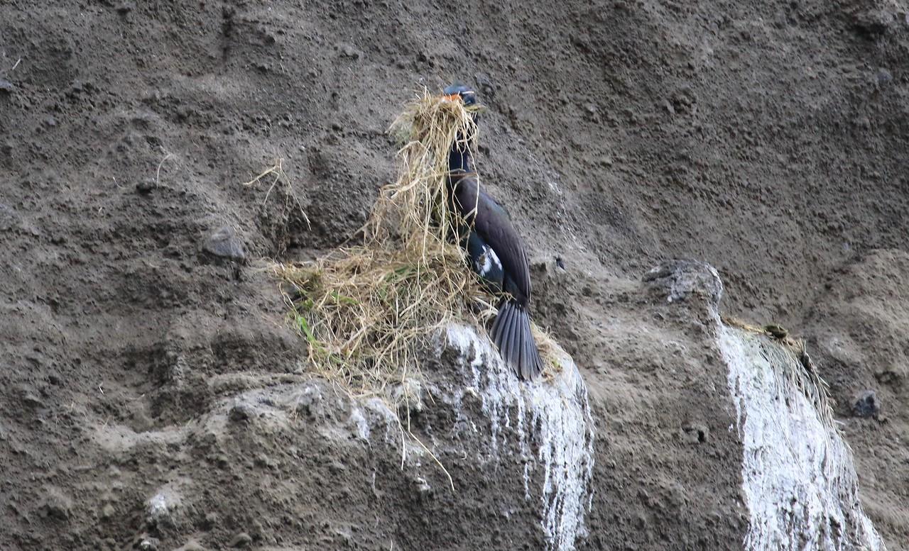 M -Doing nesting chores