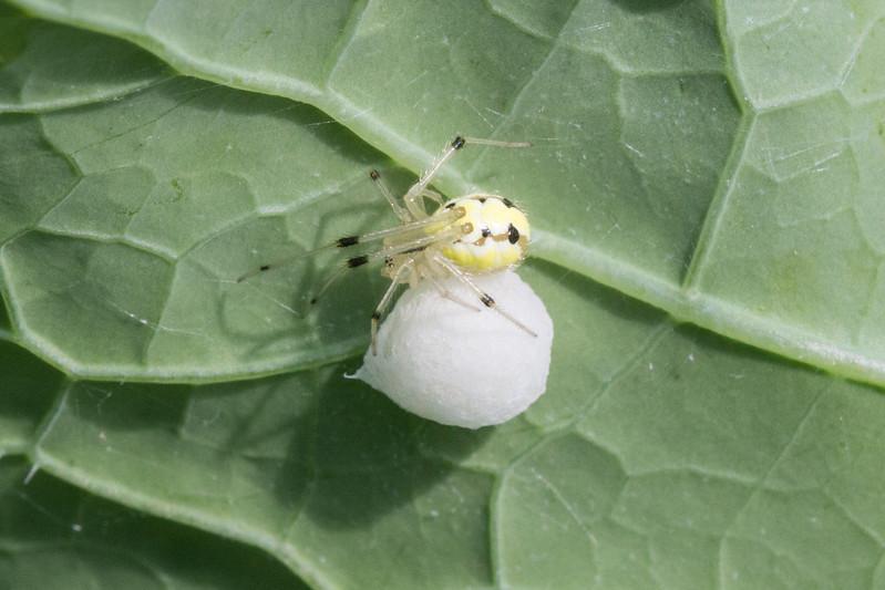 J - Spider Mother