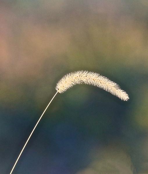 B -  Fall grass